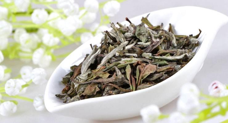 白茶如此小众,何以跻身六大茶类