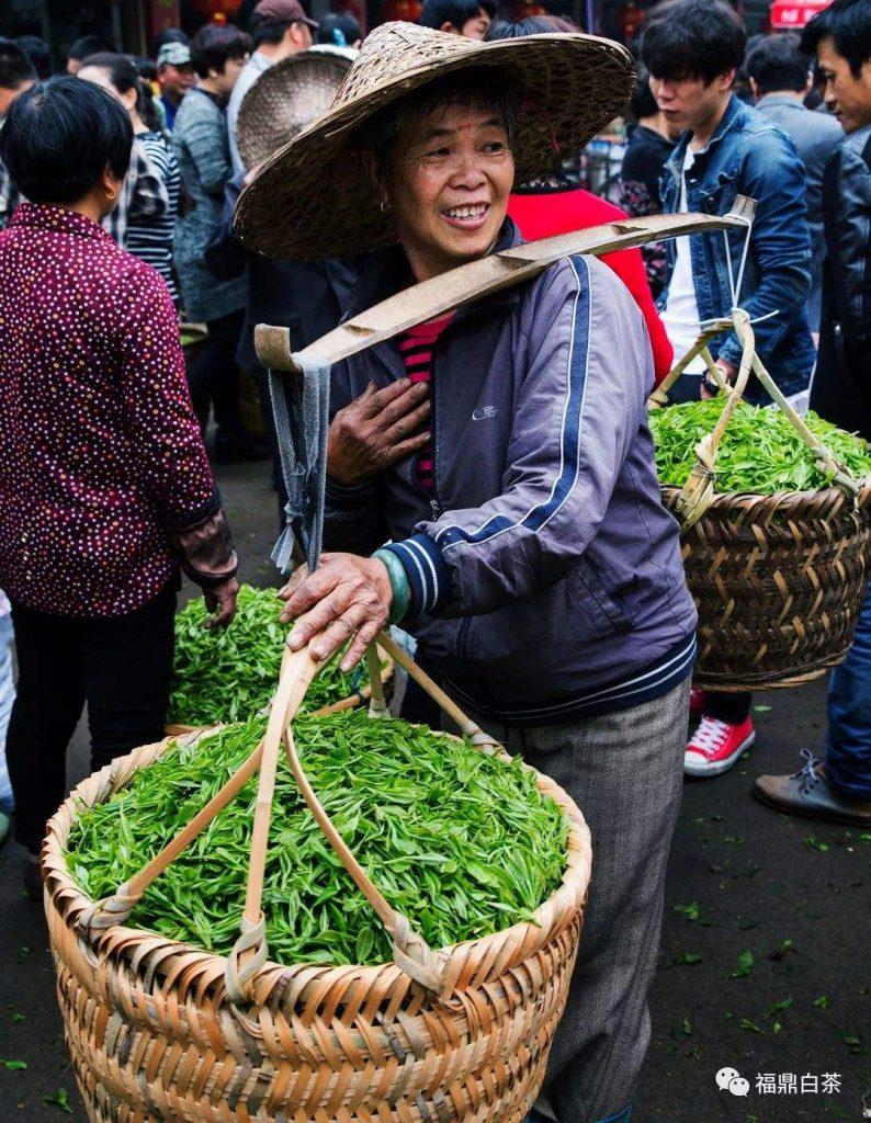 中外茶商:2020下半年白茶依然值得关注