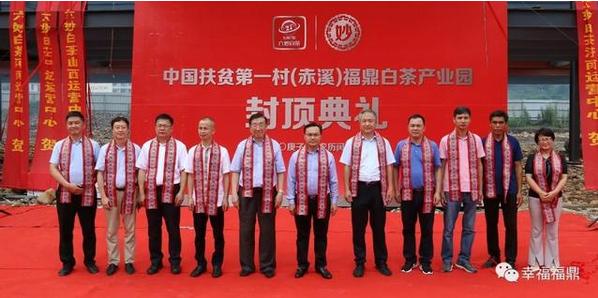 两院士成福鼎赤溪畲村白茶产业智囊团