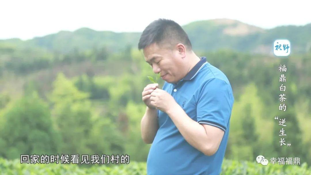 【视野】福鼎白茶成为年轻人新宠,再不喝你就out了
