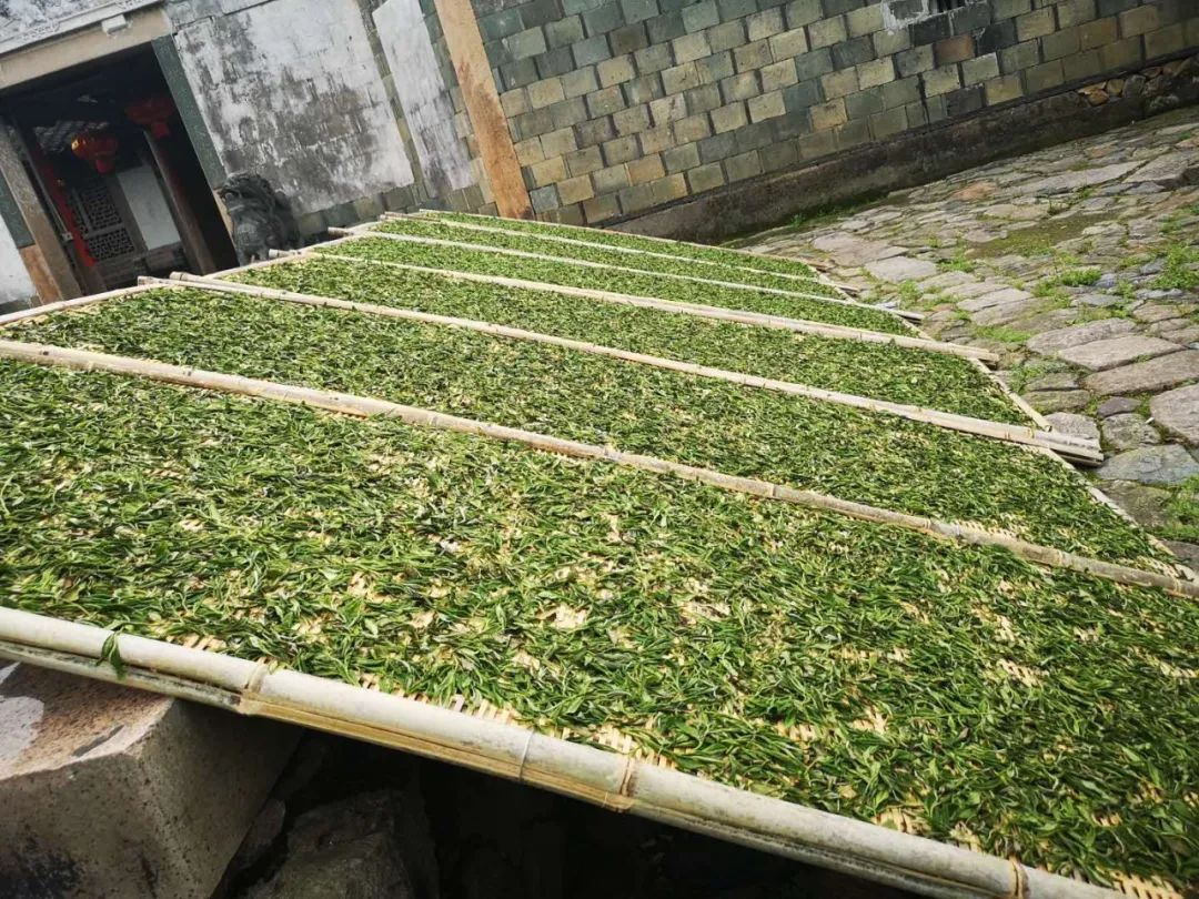 白茶为什么在六大茶类中最特殊