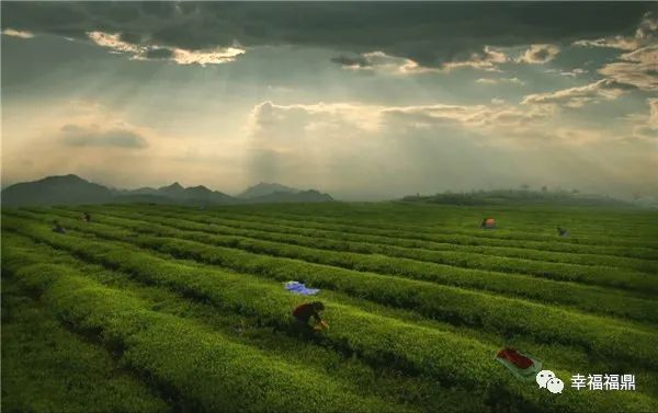 新零售时代来了!茶企们在这场紧跟潮流的培训上学到了啥?