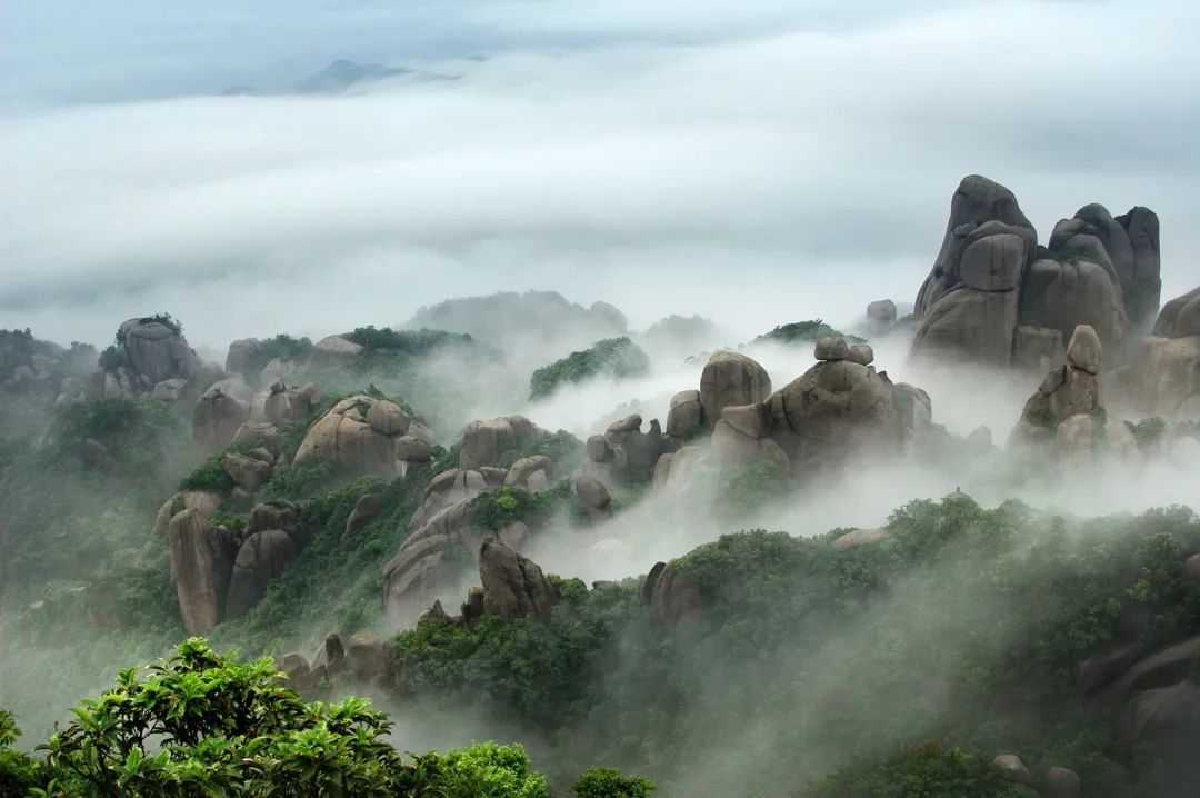 太姥山•白茶山 | 陈浩志:太姥山茶的响声