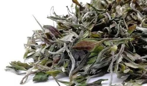 分辨丨福鼎白茶、政和白茶、月光白茶、安吉白茶