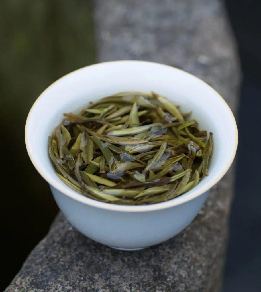植物的故事:在一株茶芽里寻到自然之气