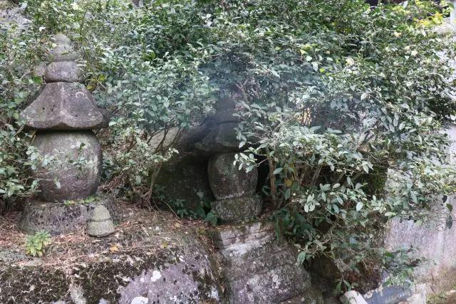 太姥山核心景区野茶树田野调查